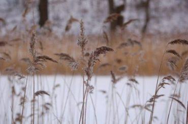 COPENHAGEN-IN-THE-SNOW-REASONS-VISIT-IN-WINTER-Oregon-Girl-Around-the-World-Grasses-Nature-e1483879359160