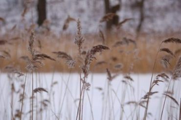 COPENHAGEN-IN-THE-SNOW-REASONS-VISIT-IN-WINTER-Oregon-Girl-Around-the-World-Grasses-Nature-e1483879359160